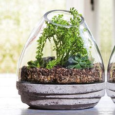 Earth Drop Table Terrarium