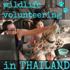 My Wildlife Volunteering Experience in Thailand