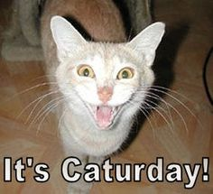 Worst 100 LOL Cats - Uncyclopedia - Wikia
