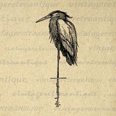 Digital Heron Bird Graphic Download Image Printable Antique
