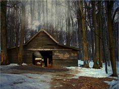 It can take up to 86 gallons of sap (depending on the sugar content) to make a single gallon of maple syrup!