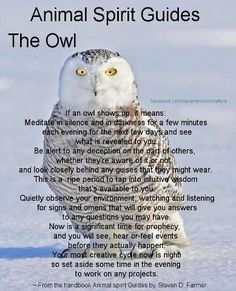 Animal Spirit Guide : The Owl. This is my animal spirit guide. A barn owl Spirit Animal Totem, Animal Spirit Guides, Animal Symbolism, Animal Meanings, Animal Medicine, Power Animal, Snowy Owl, Magick, Witchcraft