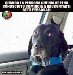 #vignette #immagini #divertenti @cani