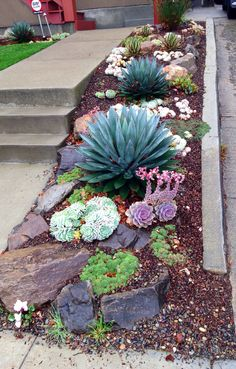 Oakland, Glenview  Love the spacing of the plants. Nothing is crowding each other. Enjoy the color scheme of the succulents and the large flat stones. Like the spikiness in contrast to the rounder plants.