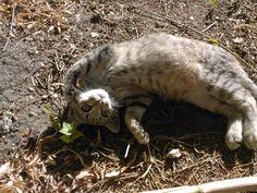 coccole, gatti, amore #catlove #cat