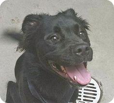 Camden, DE - American Pit Bull Terrier Mix. Meet Jenni, a dog for adoption. http://www.adoptapet.com/pet/11382617-camden-delaware-american-pit-bull-terrier-mix