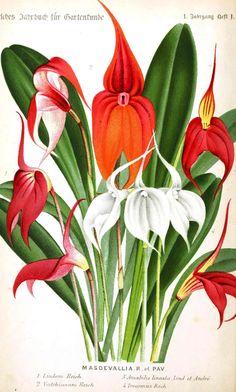 Botanical - Flower - Lilly, type