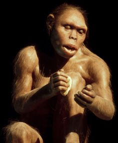 A model of a female 'Homo habilis' @ the Science Museum in Barcelona, Spain Bbc News, Homo Habilis, Early Humans, Human Evolution, Science Museum, We Are Family, Prehistoric Animals, Iron Age, Science And Nature