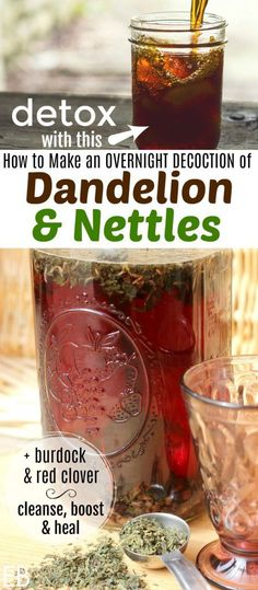 Overnight Decoction of Dandelion and Nettles, for detoxification~ This tea can be made ahead of time and kept in the fridge. Drink 1-2 glasses daily for so many health benefits. #nettles #detox #herbaltea #dandelion #burdock #redclover #detoxtea #detoxherbs #livercleanse #immuneboostingfoods #immuneboosters