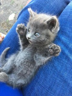 I caught a mouse and it was this biiiggg by cats kitten catsonweb cute adorable funny sleepy animals nature kitty cutie ca Pretty Cats, Beautiful Cats, Animals Beautiful, Animals And Pets, Baby Animals, Cute Animals, Sleepy Animals, Fluffy Animals, Cute Cats And Kittens