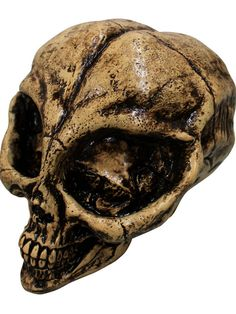 Check out Alien Resin Skull Prop - Skeletons & Skulls for Your Home from Wholesale Halloween Costumes