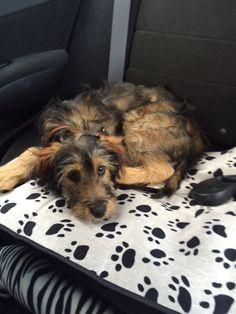 Puppy! #puppy #pet #car