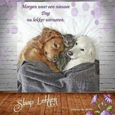 Animal Quotes, Disney Pictures, Happy Friday, Funny Texts, Sweet Dreams, Good Night, Animals And Pets, Humor, Cats
