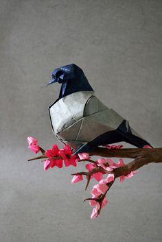 Roman Diaz. Blue Bar Pigeon by raudonasrubinas