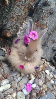Spring is here (early Spring) Flora Jeanne (Leaf-Lawn) Cute baby bunny care - Baby Care Cute Wild Animals, Cute Little Animals, Cute Funny Animals, Animals Beautiful, Animals And Pets, Cute Bunny Pictures, Cute Animal Pictures, Cute Baby Bunnies, Cute Babies