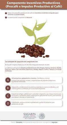 Componente Incentivos Productivos (Procafé e Impulso Productivo al Café). SAGARPA SAGARPAMX
