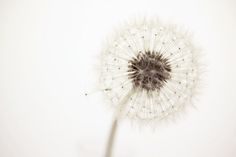 A bright watercolor background and the dandelion being white (negative space)