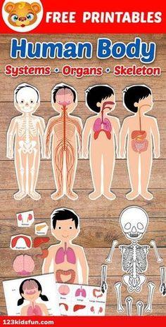 Human Body Science, Human Body Activities, Human Body Unit, Human Body Systems, Human Body Crafts, Human Body Lesson, Human Body Organs, Body Preschool, Preschool Learning Activities