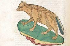 ptaki opisywane w średniowieczu - Szukaj w Google