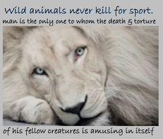 life of pi animal cruelty