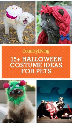 Dress up Your Four-Legged Friend in One of These Dog Halloween Costumes -  Halloween costume ideas for pets, including cats and dogs: We dare you to find cuter Halloween costumes than these. We know how cute your dog looks in her costume. But there are several items to bear in mind before selecting the most appropriate outfit for the dog. Nowadays, many individuals dress up their pets on special events such as New Year's Eve or holidays. Choosing dog clothes is usually fun, and seeing your…