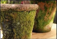 Create your own mossy pots easily, just put 3/4 cup plain active cultured yogurt into a blender, add a handful of moss and about 3/4 cup water, and blend for about 30 seconds. Use a paintbrush to spread the mixture wherever you want moss to grow on your terracotta pots. You can also paint between the cracks of a stone path as long as the areas you choose are cool and shady. Keep misting the moss with water until it is established.