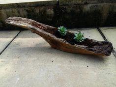 Driftwood planters