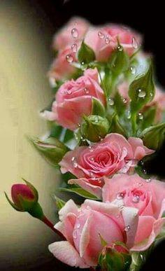 Vaaleanpunaista