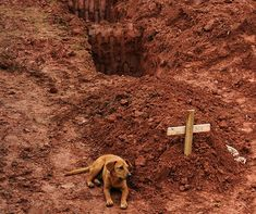 """A dog named """"Leao"""" sits for a second consecutive day at the grave of her owner, who died in the disastrous landslides near Rio de Janiero on January 2011 Canada Goose Homme, Heart Touching Story, Animal Tracks, Loyal Dogs, Puppy Mills, Dog Names, Wells, Uganda, Mammals"""