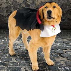 Your pup will look suave in this Vampire Dog Costume straight out of Transylvania.  #partycity #halloween