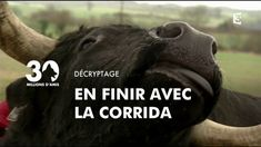 30 Millions d'Amis anti corrida Fadjen 20-05-2015 Movies, Movie Posters, Running, Amigos, Films, Film Poster, Cinema, Movie, Film
