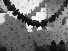 Bats in spotlight