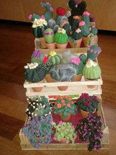 Cactus photo only. No pattern, no link.