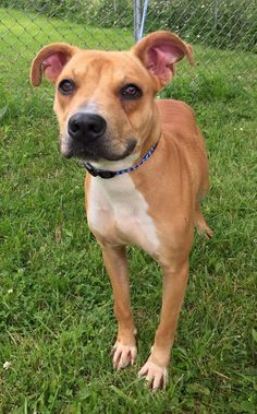Meet Kennel # 09, a Petfinder adoptable Pit Bull Terrier Dog | Elyria, OH | Kennel #  09  available for adoption  NOW