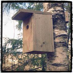 Mitt liv som Toril :o): Fuglekasse 2016 Bird, Outdoor Decor, House, Home Decor, Decoration Home, Room Decor, Birds, Haus, Interior Design