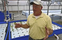 2.3.14 - A double harvest - John Morris operates an Aquaponics farm in Isle of Wight.  No fertilizers or pesticides are required to grow produce feed by the waste produced by tilapia raised in the symbiotic greenhoused system.