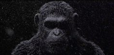 War for the Planet of the Apes teaser released   A teaser for War for the Planet of the Apes has been released during New York Comic Con. We see a snowy vestige of Caesar and his voice-over apologizing for the war that has begun. Also during NYCC directorMatt Reeves producer Dylan Clark and Andy Serkis will debut a behind-the-scenes footage. The event will take place tonight at 8:30  9:30 p.m. at the Regal E-Walk Theater at247 West 42nd Street.  InWar for the Planet of the Apes the third…