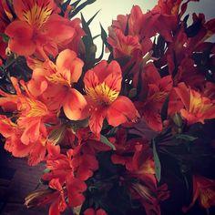 """""""Eu ando pelo mundo Prestando atenção em cores Que eu não sei o nome Cores de Almodóvar Cores de Frida Kahlo Cores!...."""" Esquadros Adriana Calcanhoto  #Flores #Cores #Colores #AdrianaCalcanhoto #FridaKahlo #Almodovar #FinalDeSemana #Astromelias"""