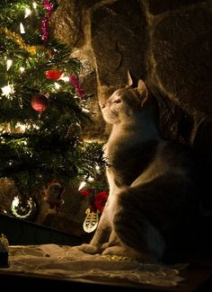 May your days be merry and bright ....   Furry Friends   Pinterest ...