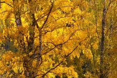 Gilded Autumn by Päivi Vikström on 500px