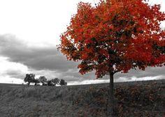 Ein flammender Baum in einer monochromen Landschaft: Dieses Leinwandbild weckt…