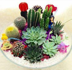 Jardim Mini Cactus Garden, Succulent Gardening, Cactus Flower, Cacti And Succulents, Planting Succulents, Cactus Plants, Cactus Terrarium, Garden Terrarium, Terrarium Wedding