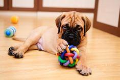 Consejos para elegir el mejor juguete para perros