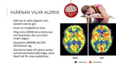Hjärnan del 2