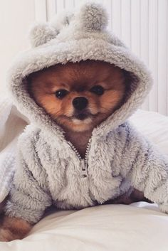 OMG!!!!!  This is seriously the most cutest dog  ever!!!!!