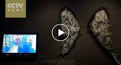 2 Crianças Partem Delicada Obra De Arte De Vidro Enquanto Adultos Assistem e Filmam Momento