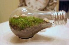 使用済み電球を「テラリウム」にDIYし、デスクで苔を栽培する方法 - ライブドアニュース