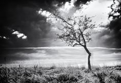 Lets Image: Burning Tree Super Happy, Travel Around, Ireland, Clouds, Park, Green, Outdoor, Image, Outdoors