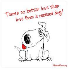 adopt a rescue dog!!!