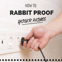 It's a fact. Rabbits chew. But don't worry, rabbit proofing your home can be easy when you know what you're doing ♥